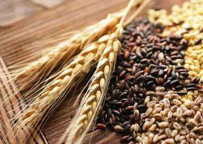 الفرق بين الشعير و ملت الشعير والحبوب